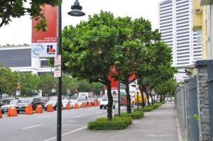 native-trees-lining-up-the-streets-of-bgc-1-768x510